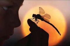 Dragonfly001